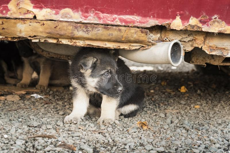 Cubs Under Car stock image