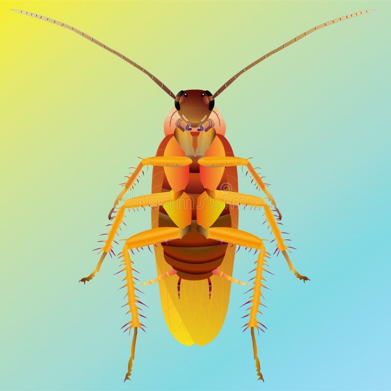 Cucaracha ilustración del vector