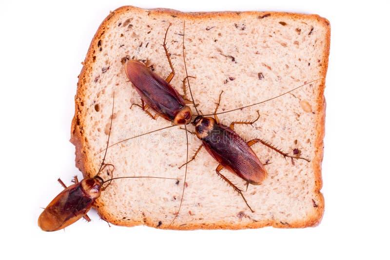 cucaracha foto de archivo libre de regalías
