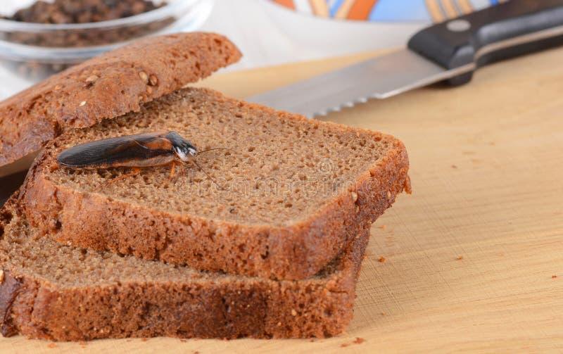 Cucaracha en la comida en la cocina El problema es en la casa debido a las cucarachas Cucaracha que come en la cocina imagen de archivo