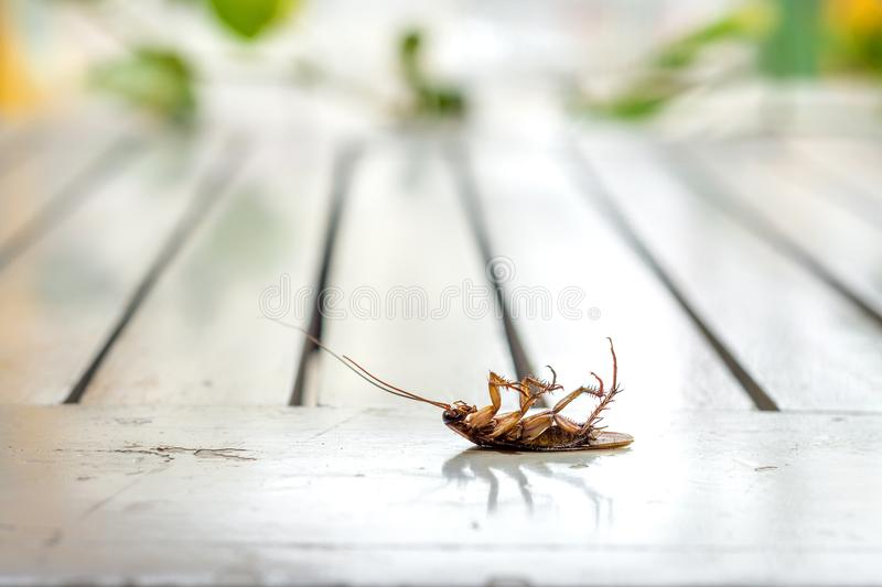 Download Cucaracha morto immagine stock. Immagine di creepy, insetto - 117976373