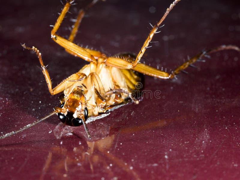 Cucaracha muerta en la teja roja vieja en cocina imagen de archivo libre de regalías