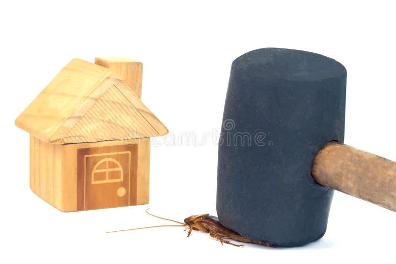 Cucarachas del golpe con la perca antes de que las cucarachas invadan la casa imagenes de archivo