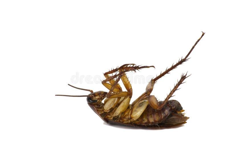 Cucarachas en un fondo blanco con la trayectoria cipping imagen de archivo libre de regalías