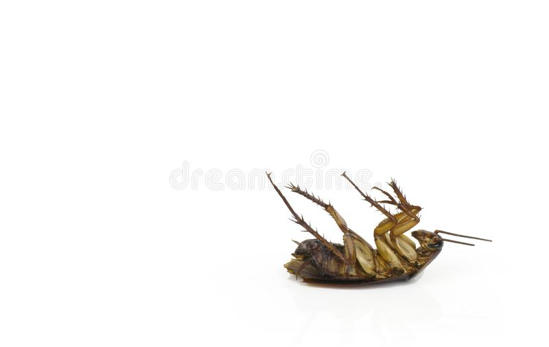 Cucarachas en un fondo blanco con la trayectoria cipping fotos de archivo