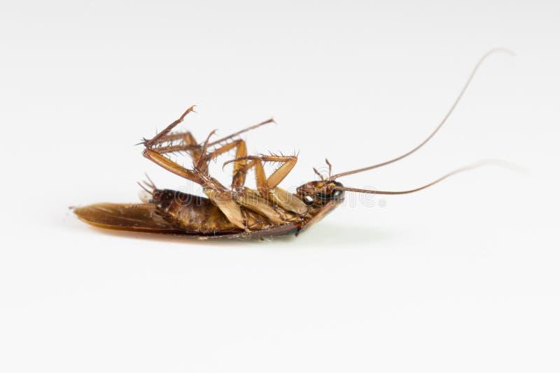 Cucarachas muertas imágenes de archivo libres de regalías
