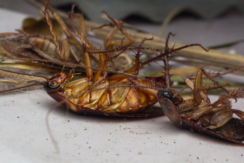 Cucarachas muertas imagen de archivo libre de regalías