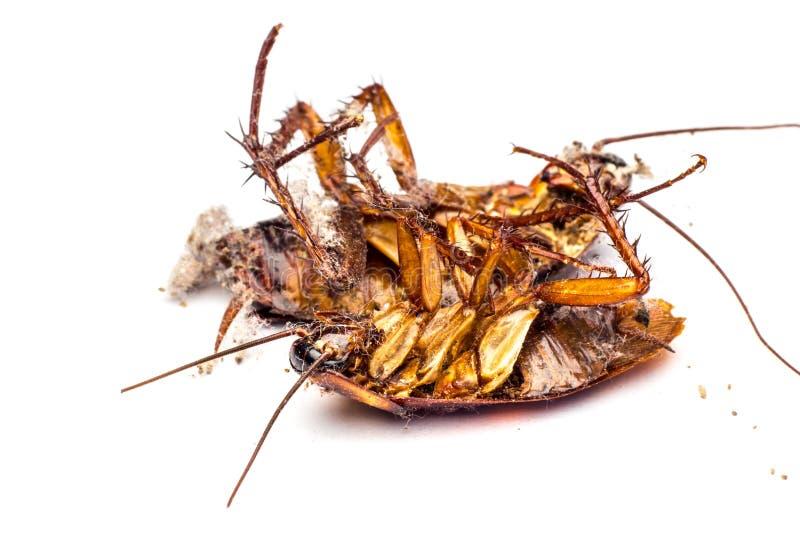 Cucarachas muertas imagenes de archivo