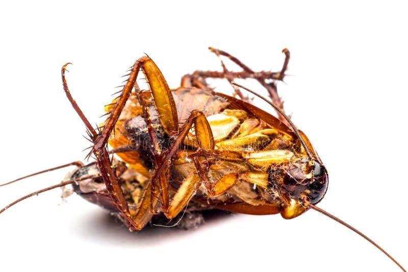 Cucarachas muertas fotos de archivo