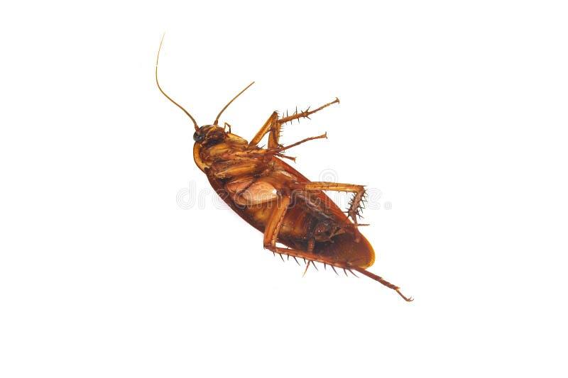 Cucarachas muertas fotos de archivo libres de regalías