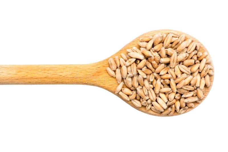 Cucchiaio di legno con i grani del grano immagine stock