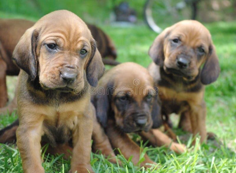 Cuccioli! immagini stock libere da diritti
