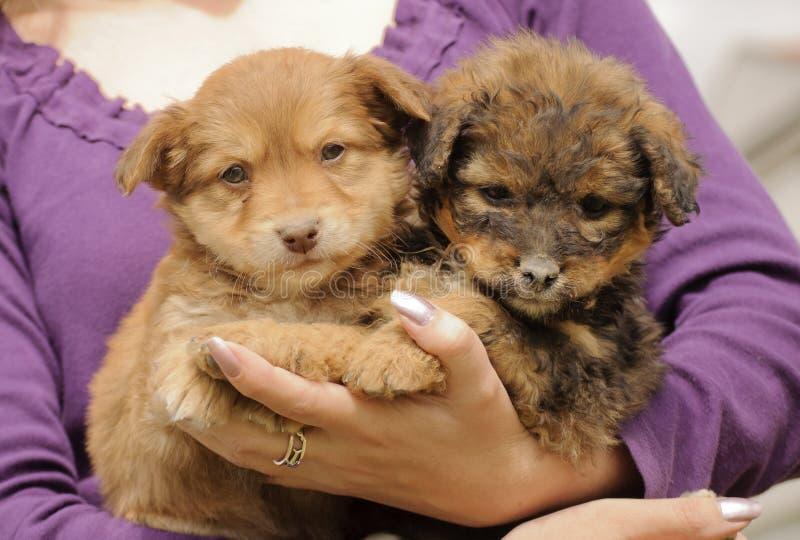 Cuccioli adorabili fotografia stock