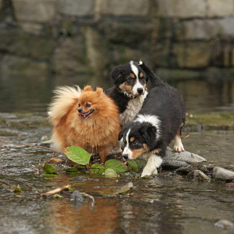 Cuccioli adorabili che si muovono in acqua fotografie stock