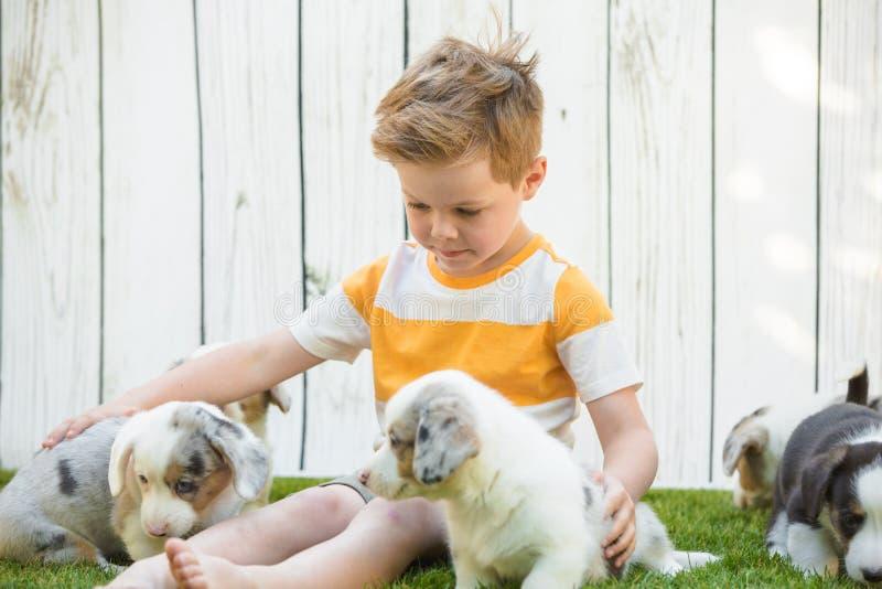 Cuccioli del corgi e del ragazzino fotografia stock libera da diritti