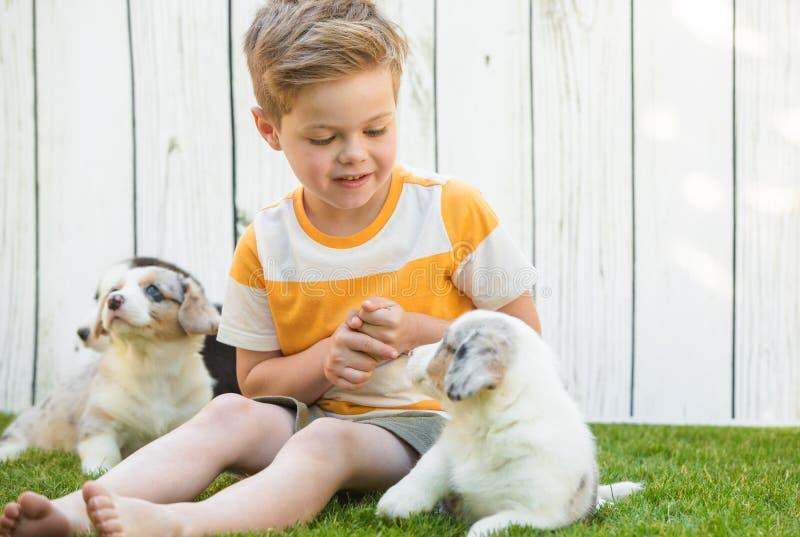 Cuccioli del corgi e del ragazzino immagine stock