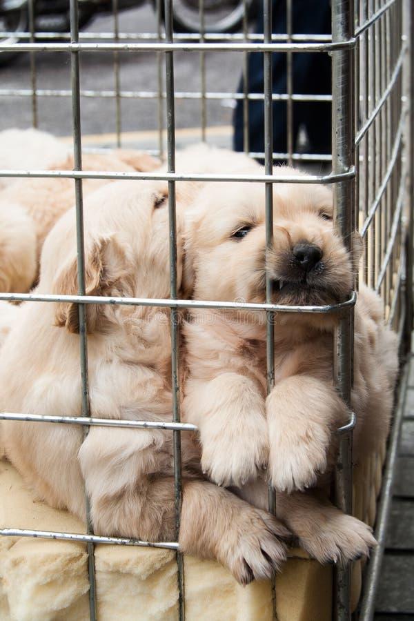 Cuccioli dentro una gabbia da vendere fotografia stock libera da diritti