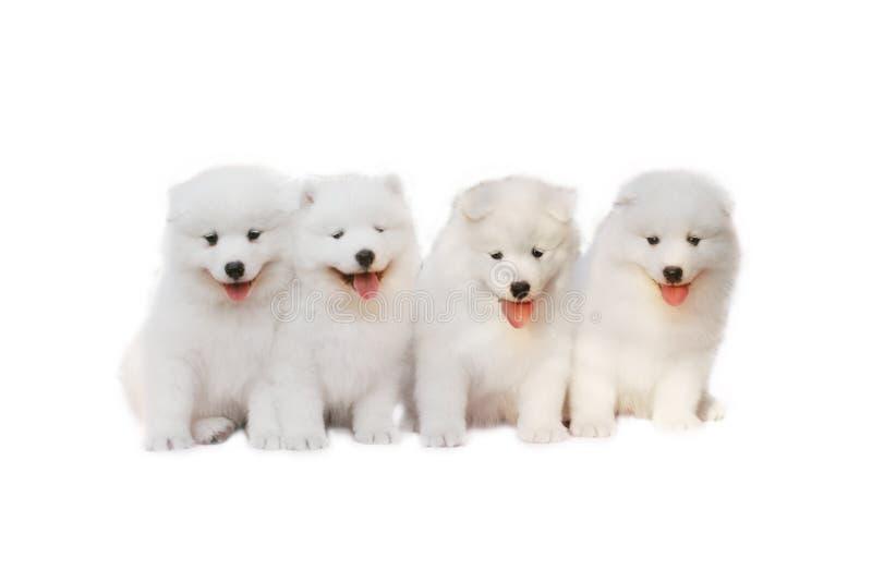 Cuccioli Svegli Fotografia Stock Libera da Diritti