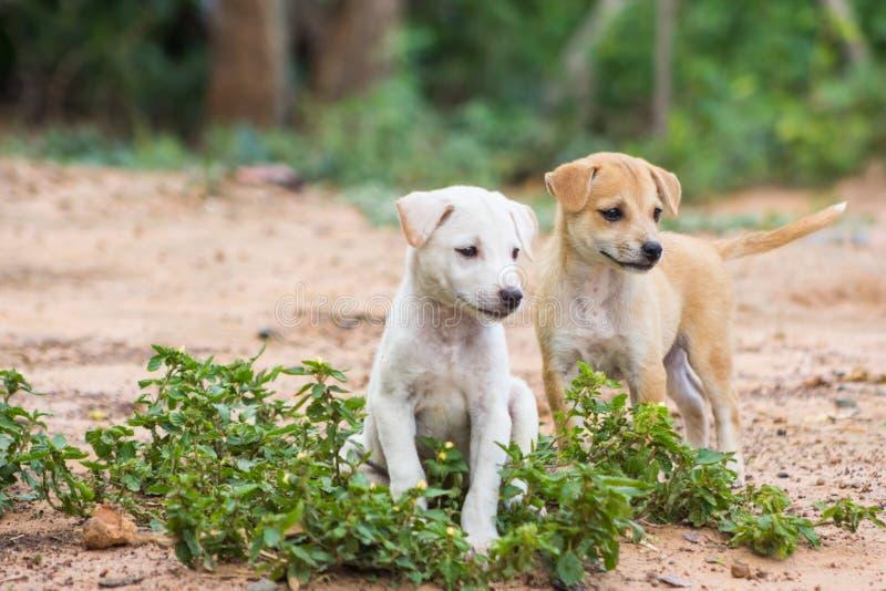 Cuccioli Tailandia immagini stock libere da diritti
