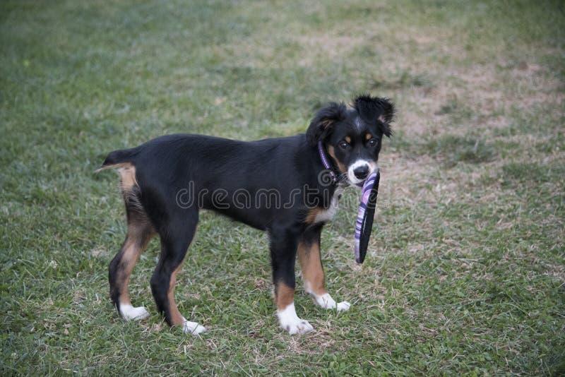 Cucciolo! fotografia stock