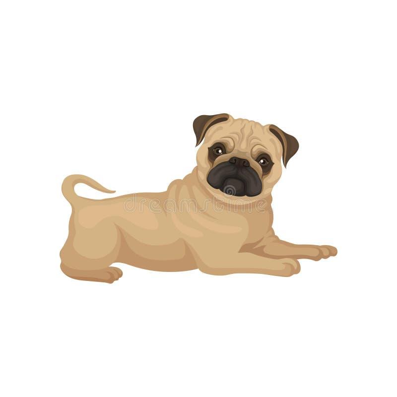 Cucciolo adorabile del carlino con la menzogne brillante degli occhi isolato su fondo bianco Piccolo cane con la museruola corrug illustrazione di stock