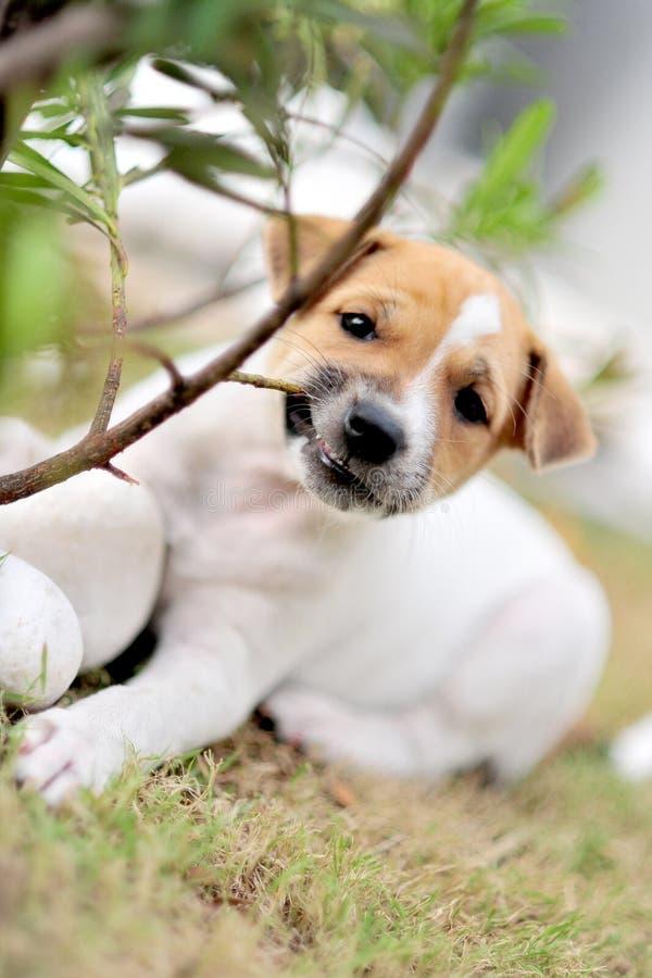 Cucciolo allegro fotografie stock
