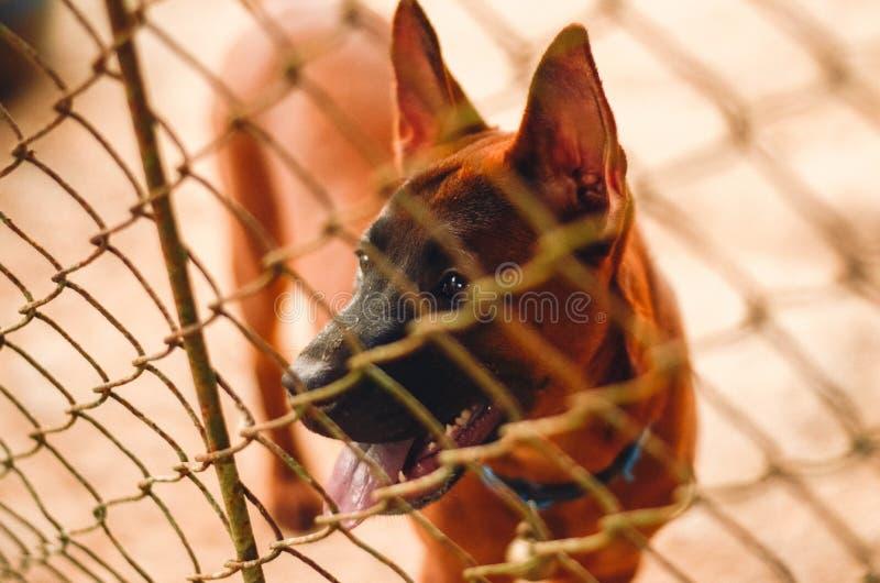 Cucciolo bloccato in una gabbia del cane immagine stock