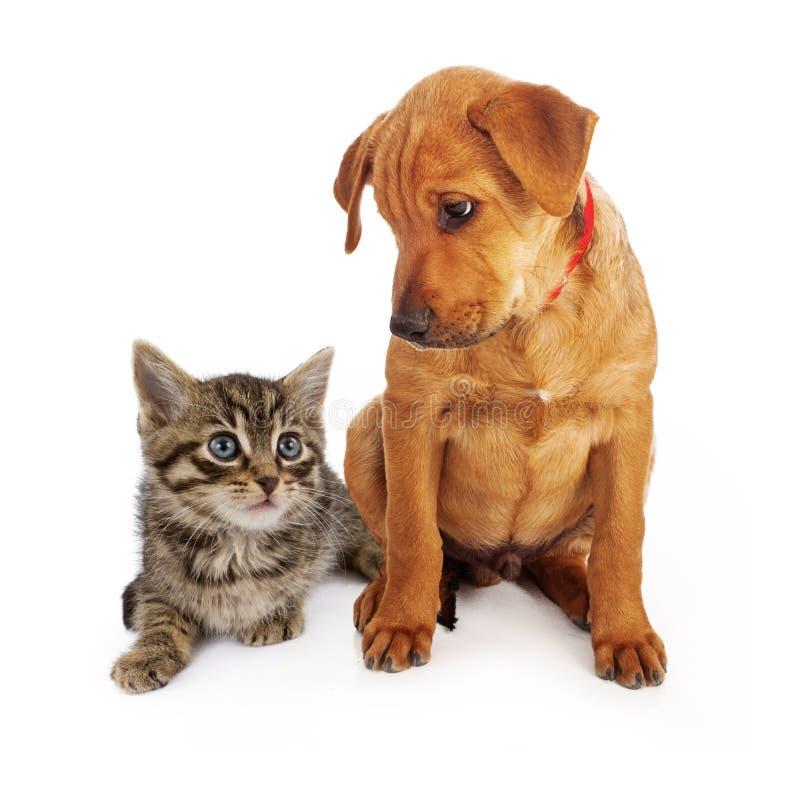 Cucciolo che esamina giù un gattino immagine stock libera da diritti