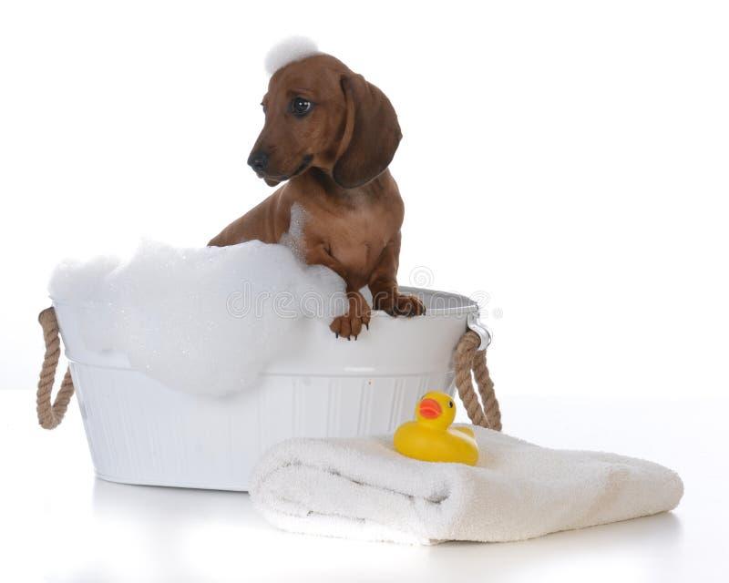 Cucciolo che ottiene un bagno immagine stock