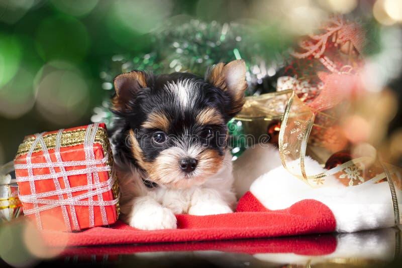 Cucciolo che porta un cappello di Santa immagine stock libera da diritti
