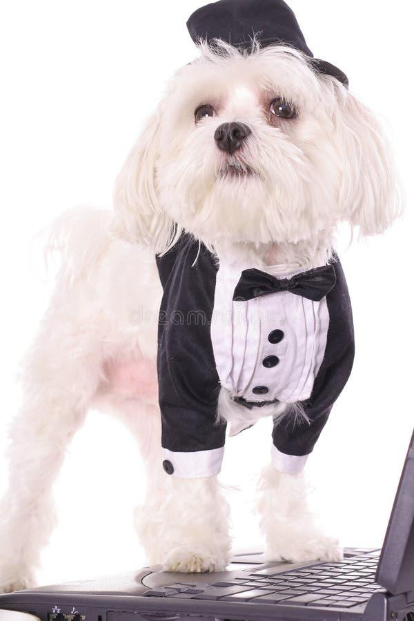 Download Cucciolo Che Trasmette Un Email Immagine Stock - Immagine di animale, domestico: 3884673