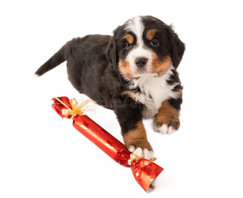 Cucciolo con il regalo di natale fotografia stock libera da diritti