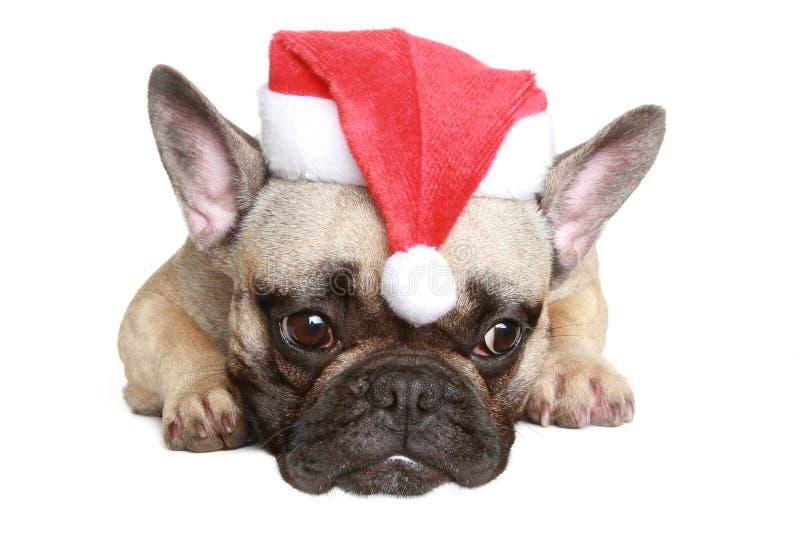 Cucciolo del bulldog francese in cappello di natale fotografia stock