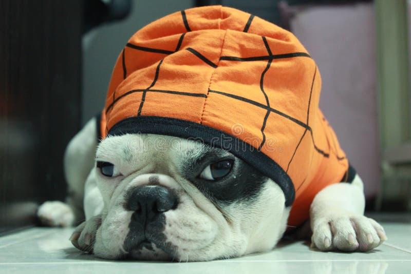 Cucciolo del cane fotografia stock
