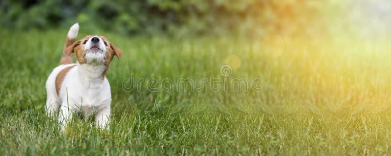 Cucciolo del cane che urla nell'erba fotografie stock libere da diritti