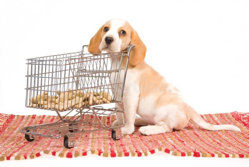 Cucciolo del cane da lepre con il mini carrello di acquisto fotografia stock libera da diritti