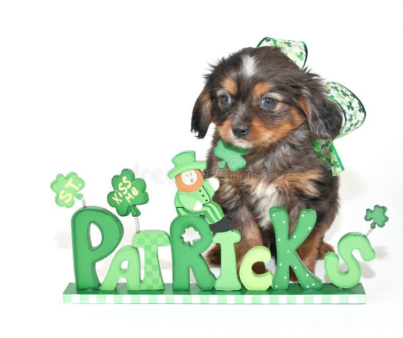 Cucciolo del giorno di St Patrick fotografie stock libere da diritti