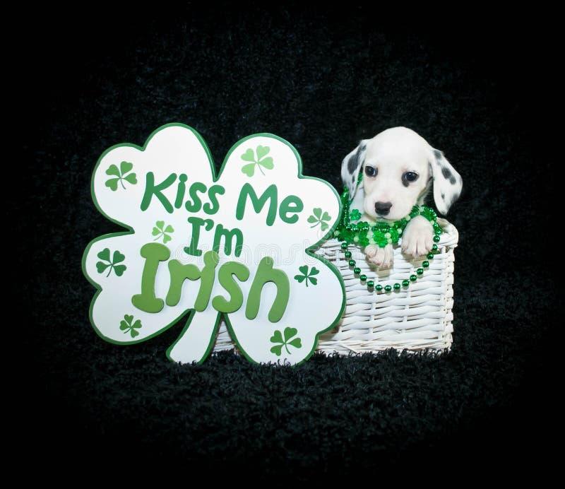 Cucciolo del giorno di St Patrick immagini stock