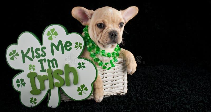 Cucciolo del giorno di St Patrick immagine stock libera da diritti