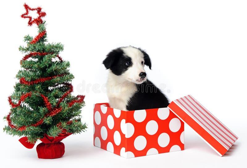 Cucciolo del regalo di natale fotografia stock