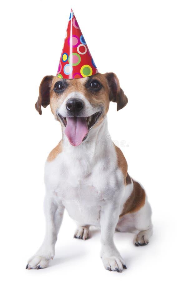 Cucciolo di buon compleanno fotografia stock libera da diritti