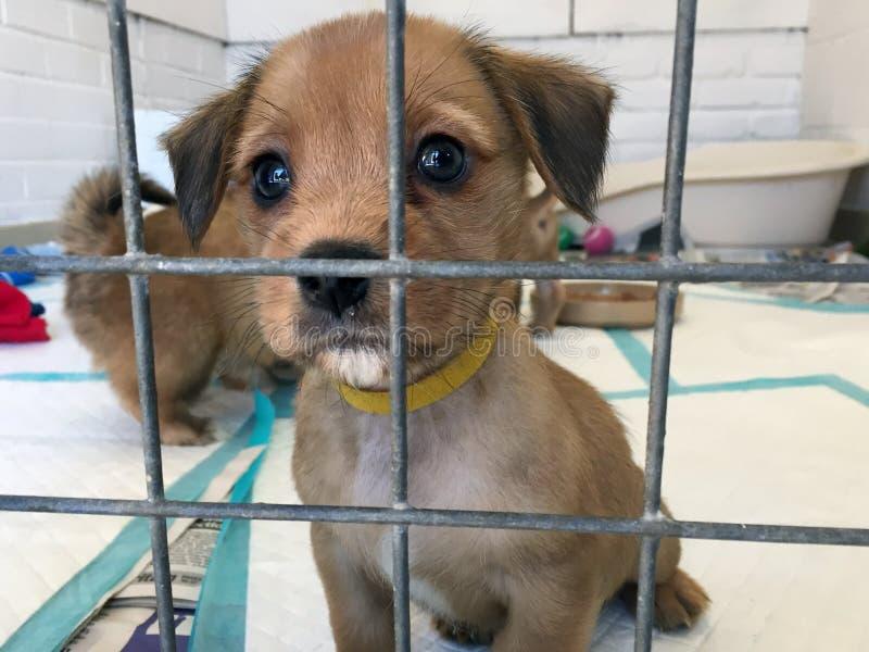Cucciolo di cane ad un riparo di salvataggio in una gabbia immagine stock