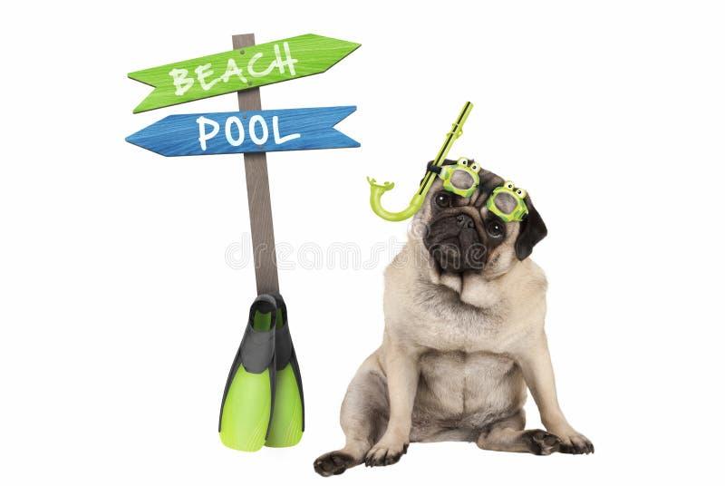 Cucciolo di cane astuto sveglio del carlino che si siede gli occhiali di protezione e presa d'aria giù d'uso, accanto al cartello fotografia stock libera da diritti
