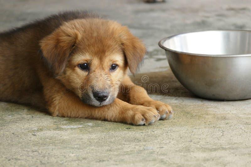 Cucciolo di cane di Brown che si trova sulla terra immagini stock libere da diritti