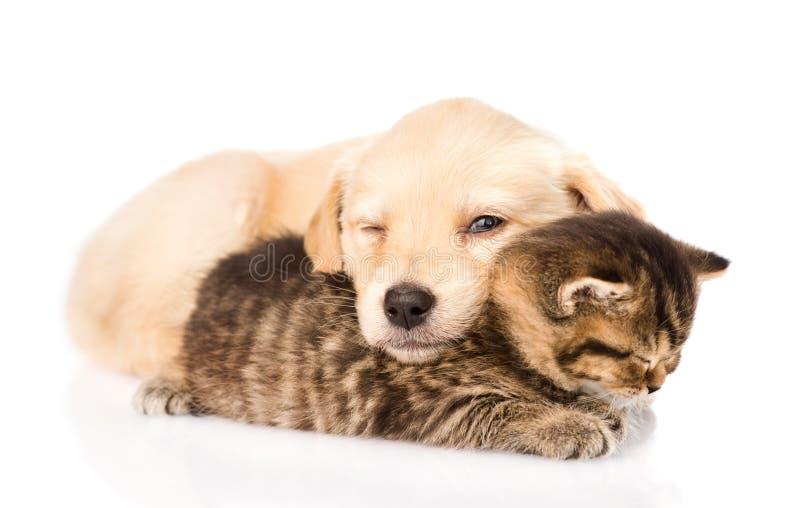 Cucciolo di cane del bambino e piccolo gattino che dormono insieme Isolato fotografie stock libere da diritti