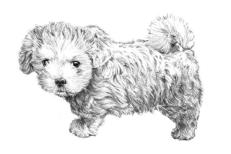 Cucciolo di cane disegnato a mano in bianco e nero royalty illustrazione gratis