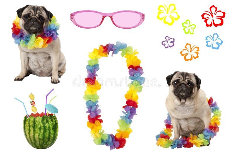 Cucciolo di cane sveglio del carlino con gli elementi variopinti del partito di estate fotografia stock libera da diritti