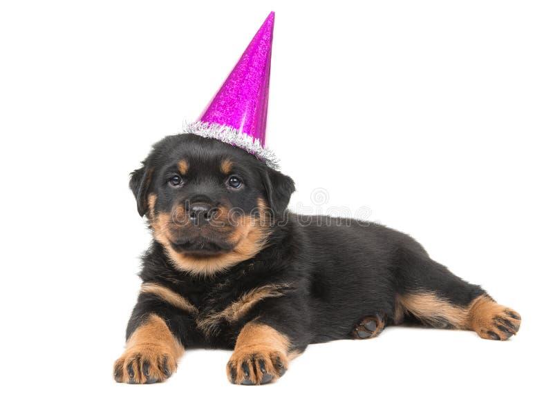 Cucciolo di cane sveglio del rottweiler che si riposa su un weari bianco del fondo fotografie stock libere da diritti