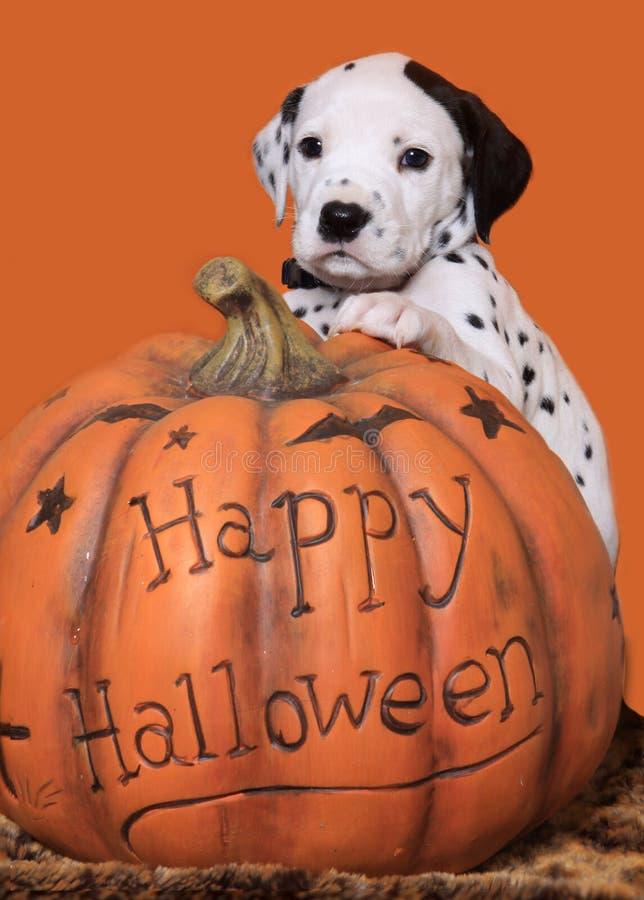 Cucciolo di Halloween immagine stock libera da diritti