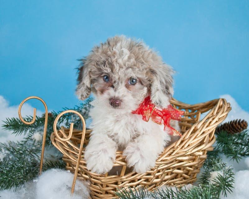 Cucciolo di Natale fotografie stock